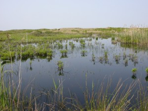 Coastal Wetlands - FWS Image Library