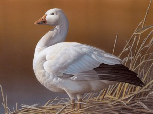 2013 Nevada Duck Stamp - Rebekah Nastav