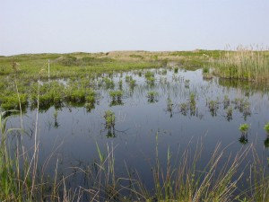 Wetland, Nomans Island, Nantucket, MA. -- Fish & WIldlife Service