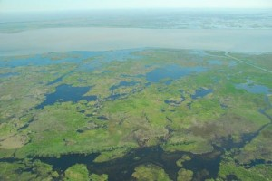 A NAWCA grant for Louisiana's Liner's Canal will benefit hundreds of acres of fresh and intermediate marsh. Louisiana has the highest rate of coastal wetland or marsh loss in North America.