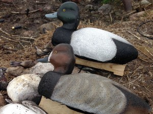 All new, Series 72 from Autumn Wings Decoys