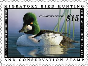 The price of the federal duck stamp has been raised only seven times in the program's history.