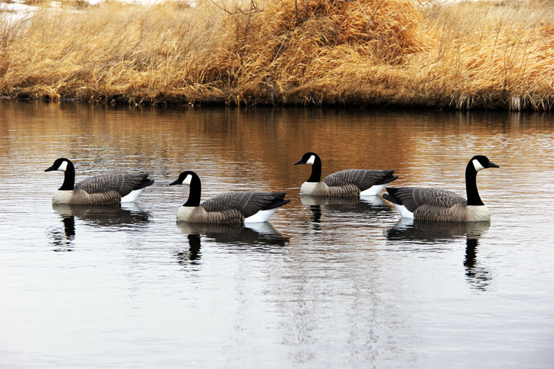 New!  Rouge Series Floaters from DOA DECOYS