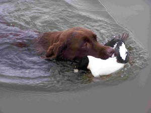 duck_retrieve